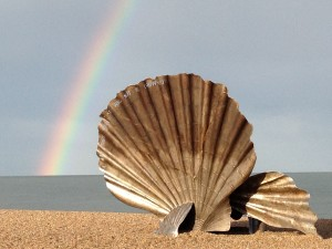 Shell with rainbow